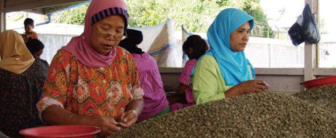 インドネシア マンデリン ブルーリントンのイメージ写真1