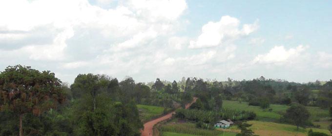 エチオピア グジのイメージ写真1