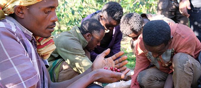 エチオピア シダモ グジのイメージ写真2