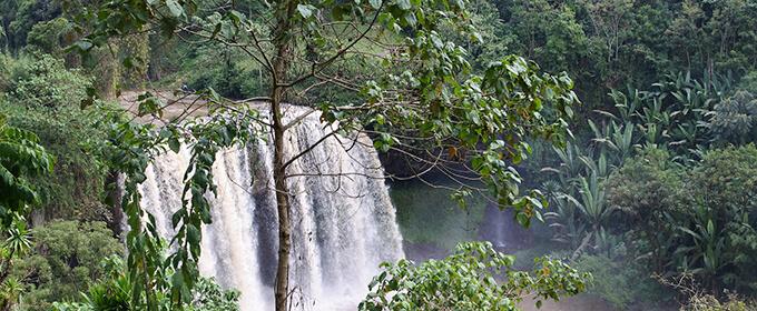 エチオピア シダモ グジ ブルーナイル ウォッシュドのイメージ写真2