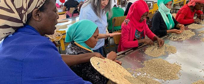 エチオピア シダモ グジ ブルーナイル ウォッシュドのイメージ写真3