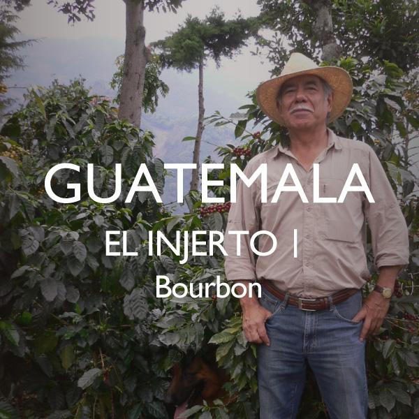 グアテマラ エル・インフェルト ウノ農園 ブルボン サムネイル