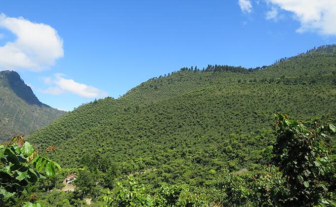 グアテマラ エル・インフェルト ウノ農園 ブルボンのイメージ写真1