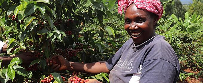 ケニア カグモイニ ファクトリーのイメージ写真1